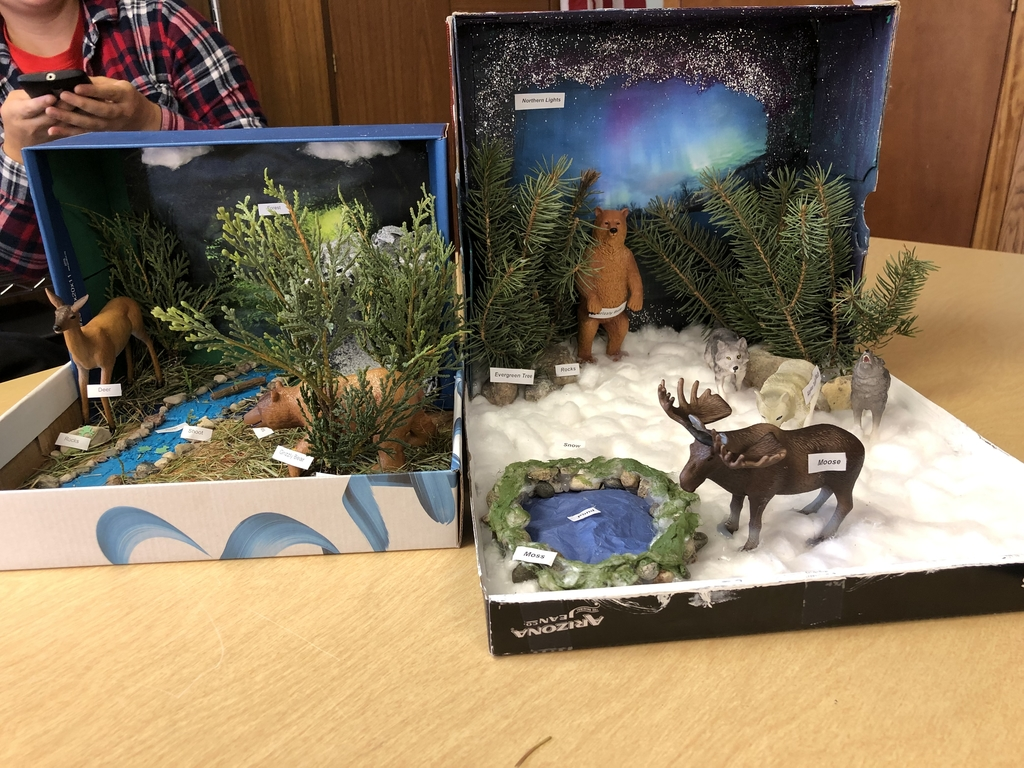 Wildlife I Ecosystems in a shoebox!